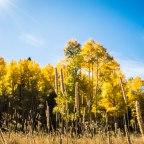 RMNP; Fall Colors